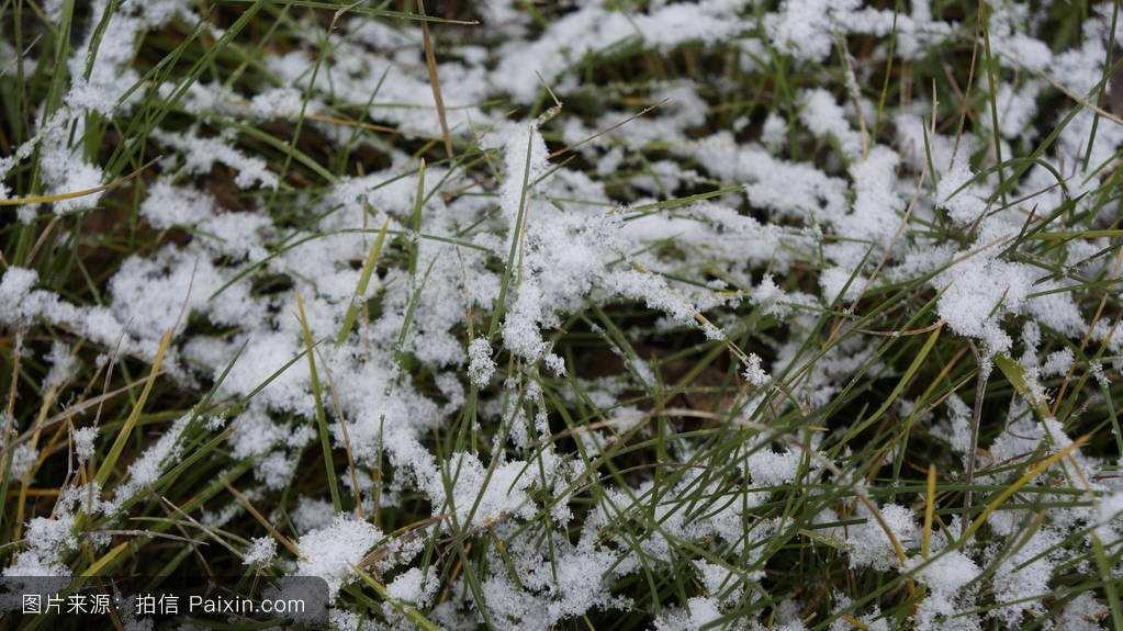 大寒雪中的草3